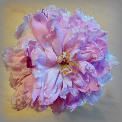 makesomething-flower