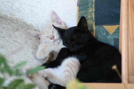 Photo Credit: Roberto Zingales http://www.flickr.com/photos/filicudi/2795892967/
